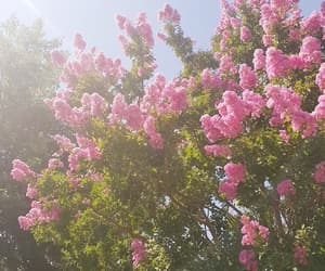 pink, summer, and tree image
