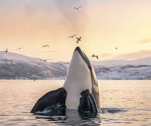 animal, sea, and nature image