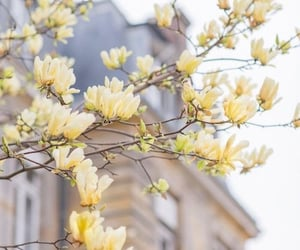 blooming, paris, and dreamy image