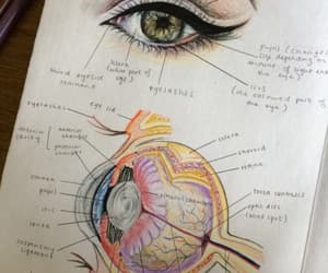 study and medicine image