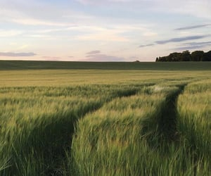 field, grass, and green image