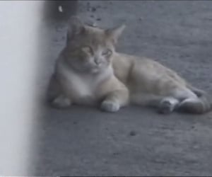 cat, low quality, and cute image