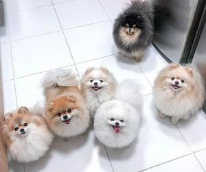 animal, dog, and loyal image