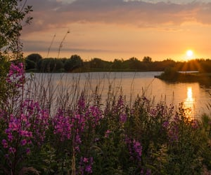 flickr, lake, and flower image
