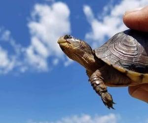 Animales, naturaleza, and Tortuga image