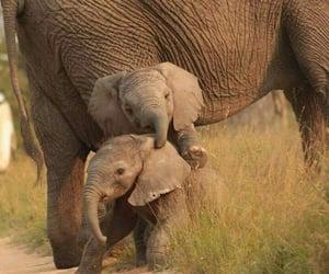 animals, elephant, and nature image