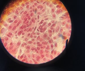 biology, cell, and cells image