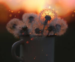 bokeh, dandelions, and flowers image