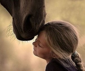 animals, horse, and cute image