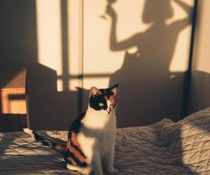 cat and shadow image