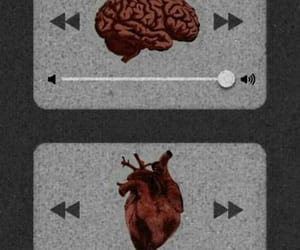 wallpaper, heart, and brain image