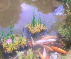 aesthetic, fish, and nature image