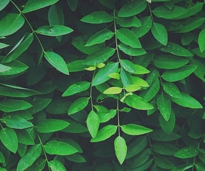 aesthetic, green, and theme image