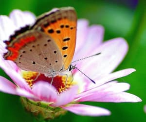 butterfly, dpz, and flowers image