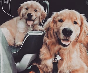 dogs, animal, and puppy image