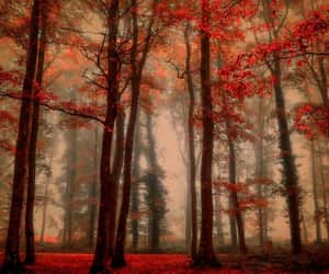 graphic arts, backgrounds, and nature image