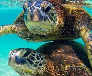 turtles and nature image