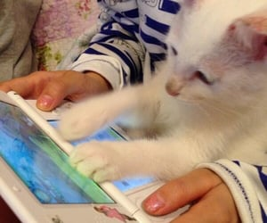 cat, games, and japan image