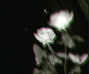 Image by Kiana Sadé
