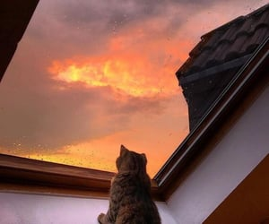 cat, sunset, and animal image