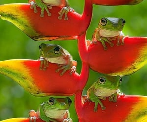 frog, animals, and nature image