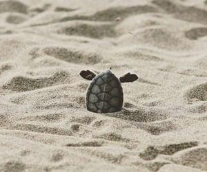 turtle, animal, and sand image