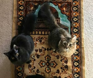 cat and islam image