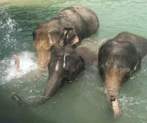 blue, elephants, and water image