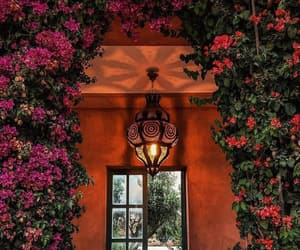 architecture, facades, and flowers image