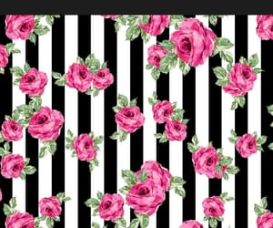 wallpaper, roses, and background image