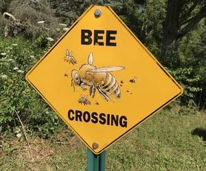 bee, aesthetic, and yellow image
