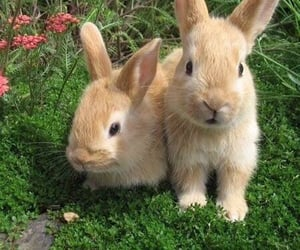 theme, aesthetic, and bunny image
