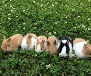 bunny, animal, and grass image