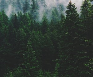 forest, tree, and green image