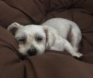 dog, puppy, and sleepy image