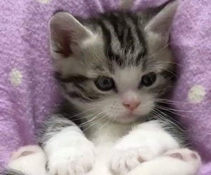 cat, dpz, and cute cat image