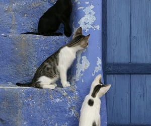 cat and kitty image