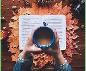 autumn, fall, and socks image
