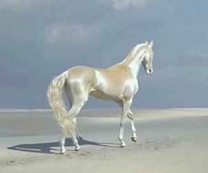 horse, animal, and white image