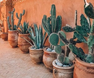 cactus, plants, and beauty image