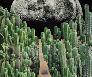 aesthetic, road, and cactus image