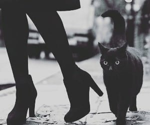 black and white, cat, and black cat image