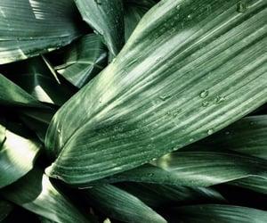 green, nature, and botanical image