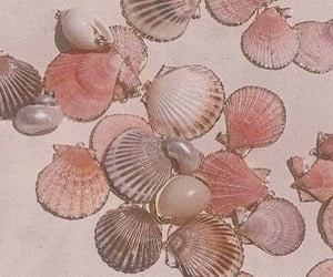 aesthetic, pink, and seashells image