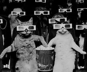 cat, cats, and popcorn image