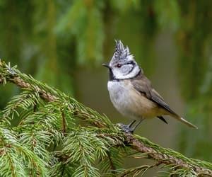 animal, birds, and birdwatching image
