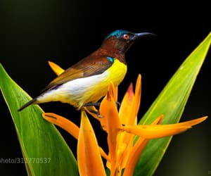 animals, avian, and tropical image