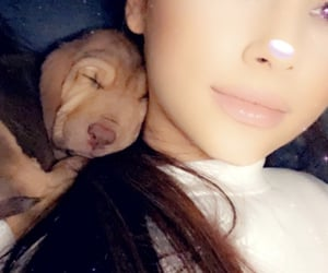 dogs, cute, and ariana grande icons image