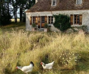 Chicken, cottagecore, and cottage image