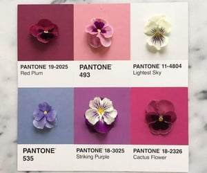 colors, flowers, and pantone image